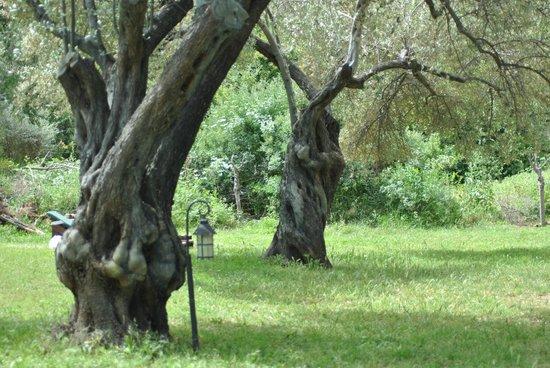 Emel Pension : heerlijk luieren in de olijfboomgaard. liggend in de hangmat