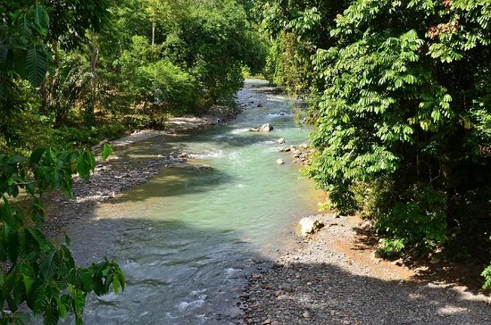 Jungle Lodge : The view from the restaurant: swimmable river below