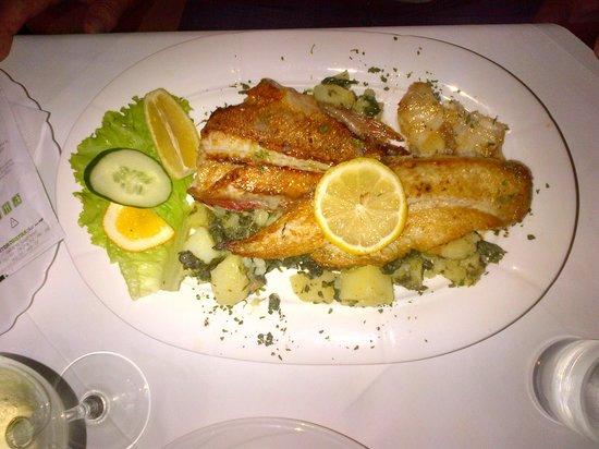 La Rosa: fishes