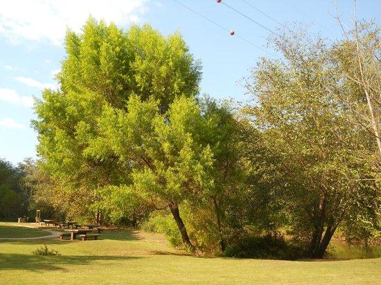 Little River Trail: Pretty tree!