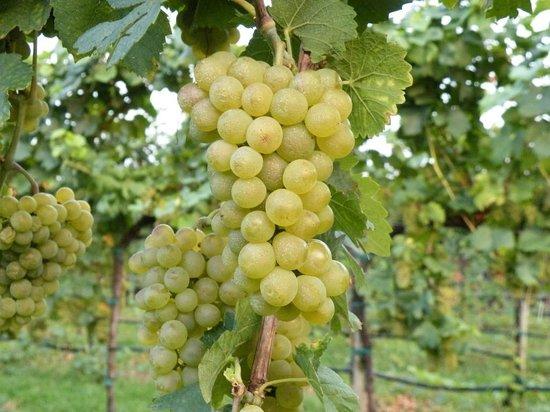 Bessich Vini