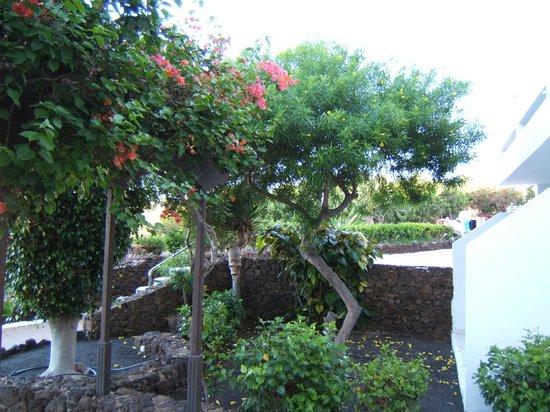 Apartamentos Camels Spring: Il giardino di lava dell'appartamento
