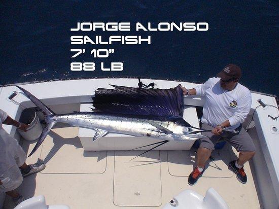 Star Fleet Sportfishing: JORGE ALONSO - PEZ VELA