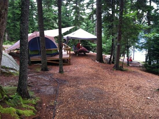 Mount Desert Campground: Love the tent platforms and spacious sites