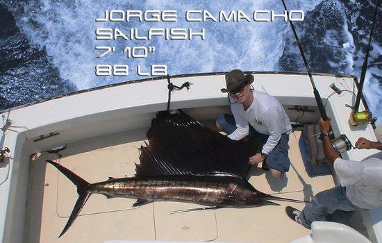 Star Fleet Sportfishing: JORGE CAMACHO - PEZ VELA