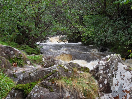 Aira Force: Lovely walk through the woods