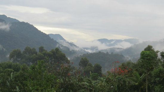 Silverback Lodge: View from my doorstep