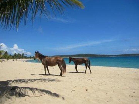 Casa de Kathy: Horses in Sun Bay Beach  / Caballos en el Balneario Sun Bay