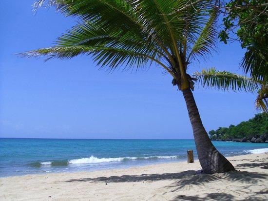 Bamboo Beach: Reggae beach