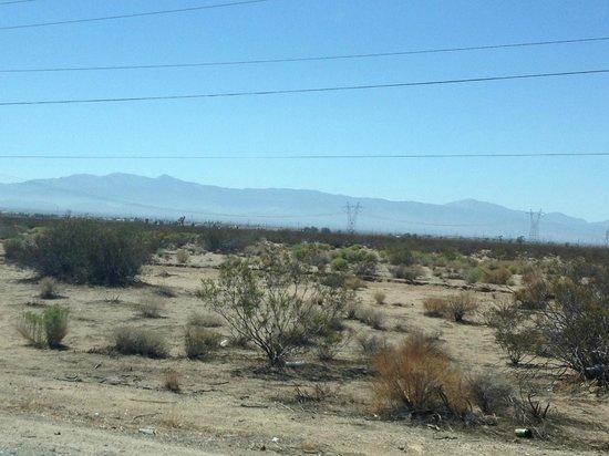 Mojave Desert : desert