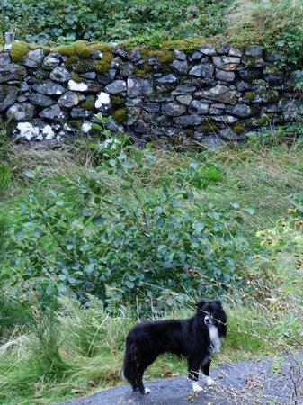 Brochs at Glenelg - Dun Telve & Dun Troddan: Friendly greeter