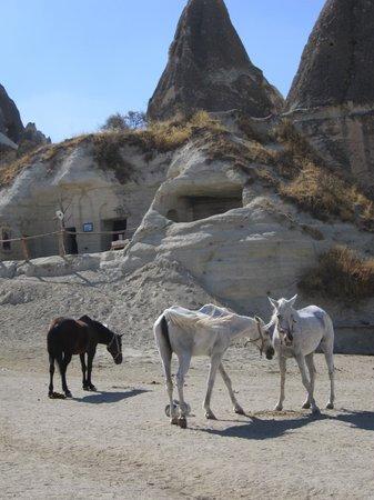 Katpatuka Travel: horses