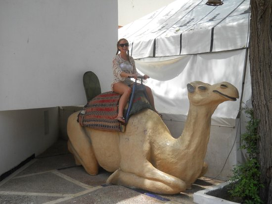 Caribbean Village Agador: On the camel
