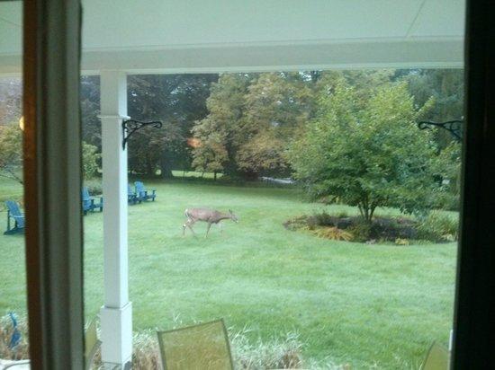 Hillsdale House Inn: A view while having breakfast