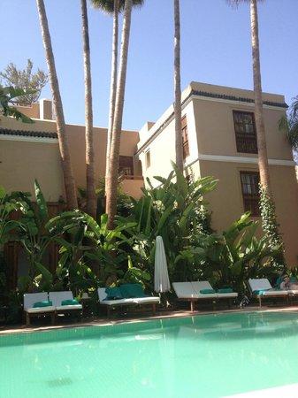Les Jardins de la Medina: palmiers géants