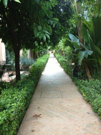 Les Jardins de la Medina: jardin