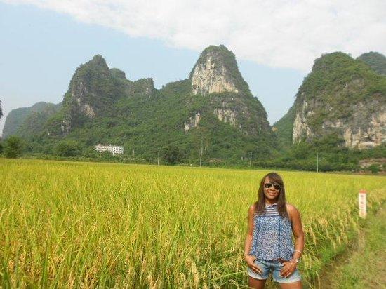 China Culture Tour : Rice fields in Yangshou