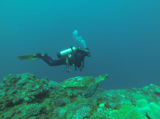 SPAD: South Pacific Adventure Divers: Joe and a turtle