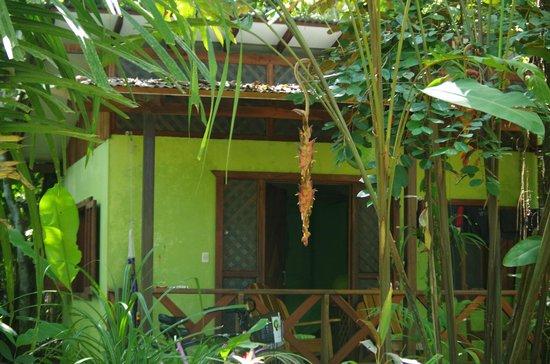 Pachamama Jungle River Lodge : front