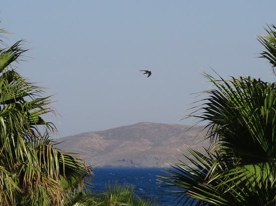 Cavo d'Oro : Sea through the palm grove