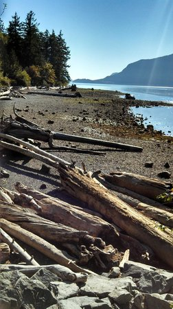 Porteau Cove Provincial Park : Logs on Dark Sandy Beaches