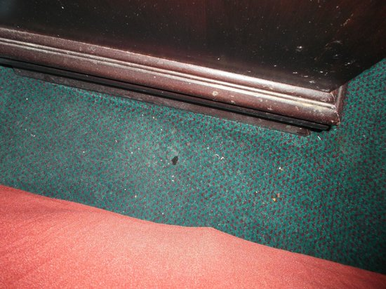 Quality Inn & Suites: not hoovered