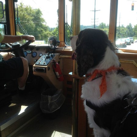 Gray Line Trolley Tours: Tommy with a front row seat
