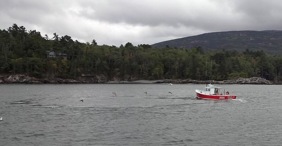 Bar Harbor Whale Watch Company: Lobster boat w seagulls hovering just above the surface on Nature Cruise