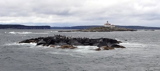 Bar Harbor Whale Watch Company: Birds on rocks with an interesting lighthouse in background, seen on Nature Cruise