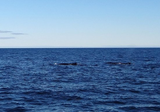 Bar Harbor Whale Watch Company: Humpback whale couple