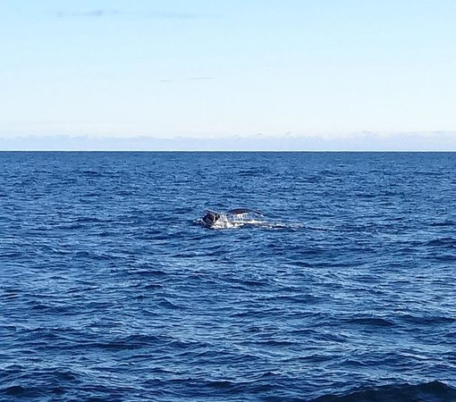 Bar Harbor Whale Watch Company: Whale tail
