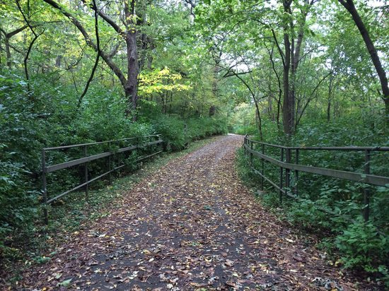Kankakee River State Park: Tree covered path