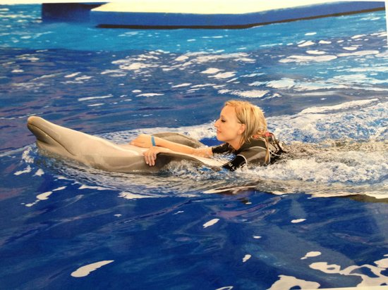 Hotel Altamar : Swimming with dolphins