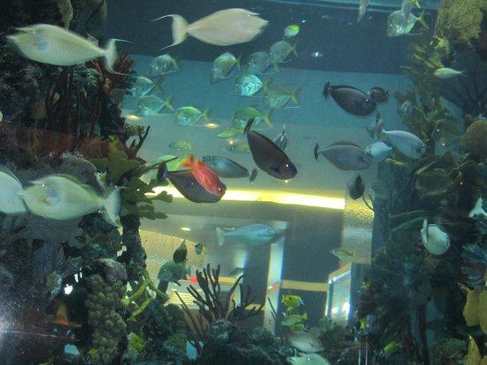 Fish tank picture of chart house restaurant las vegas for Fish tank las vegas