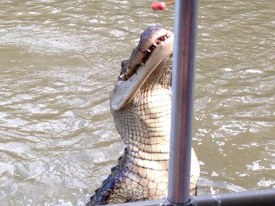 Pearl River Eco Tours : Hello fella
