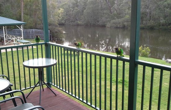 "Riverview Tourist Park : Some of the ""Welcoming"" committee on verandah"