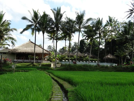 Kenanga Boutique Hotel: Views from the rice fields towards the resort