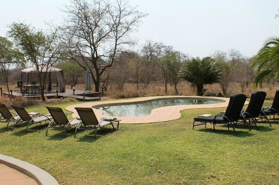 Jackalberry Lodge: Pool with watering hole in background
