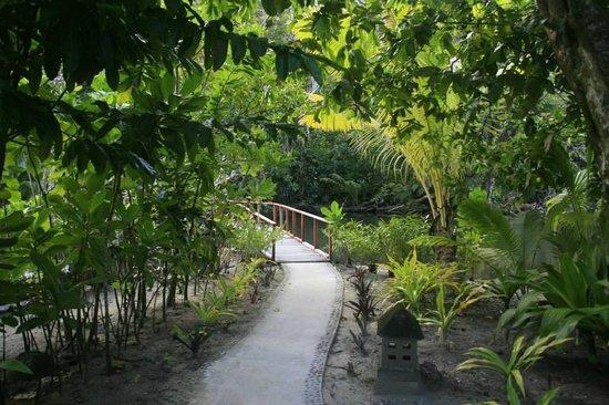 Qamea Resort And Spa Fiji: On our way to the jungle spa