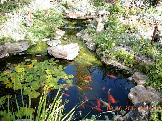 Ravens Ridge: Koi pond and waterfall