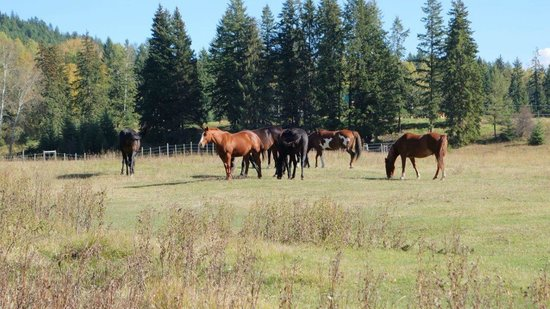Kayanara Guest Ranch & Resort: 11 horses being part of the resort