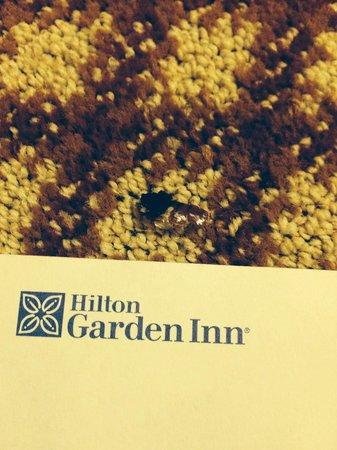 Hilton Garden Inn Las Cruces: Remains of roach on carpet