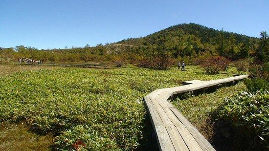 Yumiike: 弓池の隣の湿原