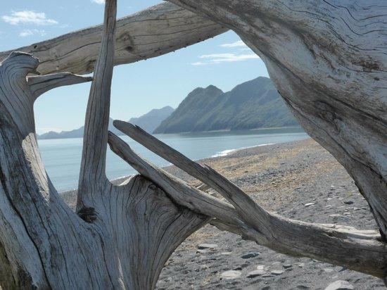 Kenai Fjords Glacier Lodge: On the beach
