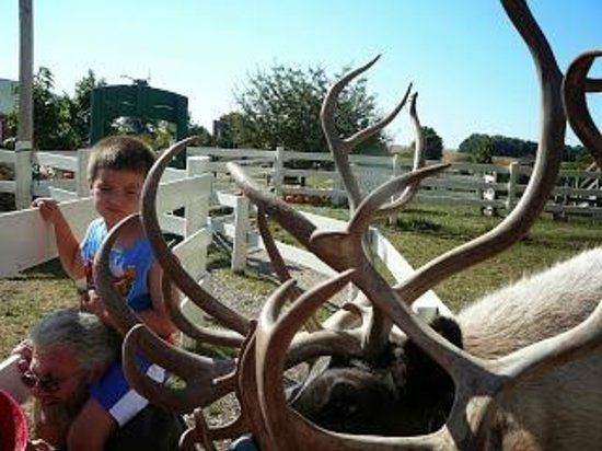 Hardy's Reindeer Ranch : A little intimidated:)