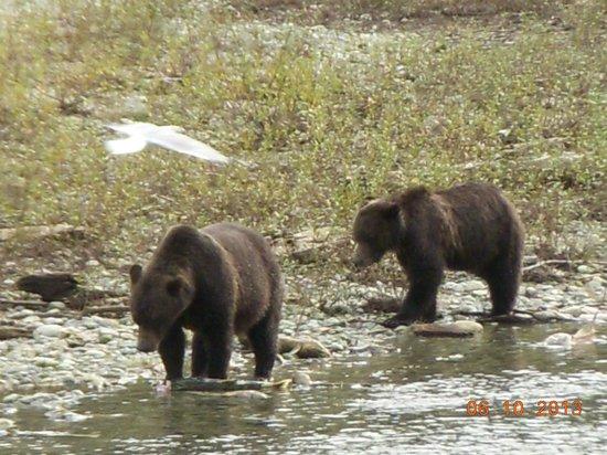 Discovery Marine Safaris Ltd.: Grizzly bear cubs