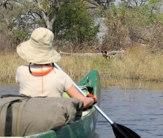 Selinda Adventure Trail: African Wild Dogs
