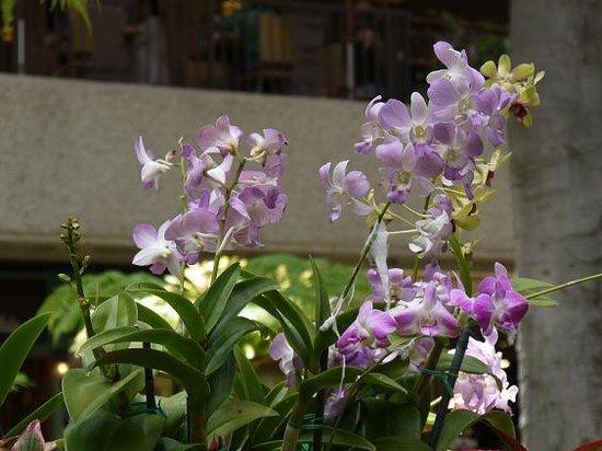 Royal Hawaiian Center : nakaniwa