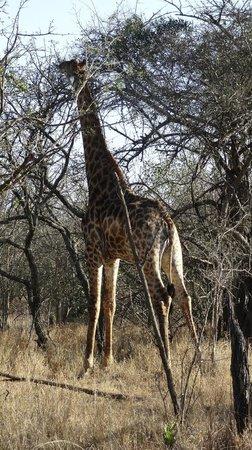 Thornhill Safari Lodge: Bush Walking at Thornhill - gives the wow factor!