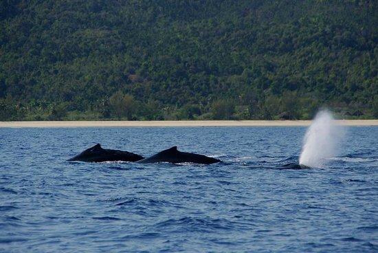 Natura Lodge Nosy Be : de juillet à novembre passage de baleines devant le lodge